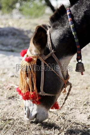 donkey from brooke hospital for animals