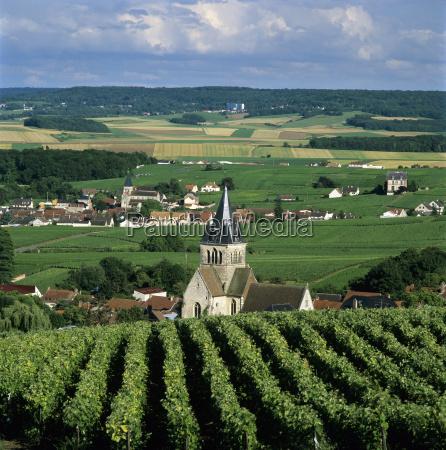 champagne vineyards ville dommange near reims
