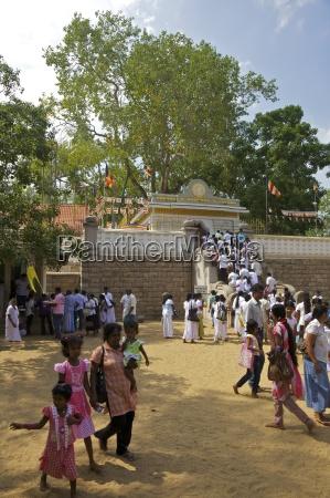 buddhist pilgrims sri maha bodhi sacred
