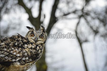 fahrt reisen farbe vogel portrait portraet