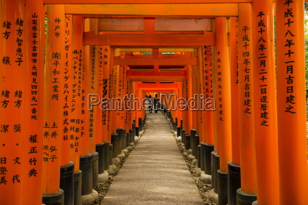 the endless red gates torii of