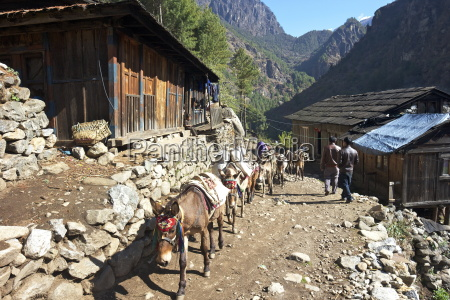 mule train between phakding and namche