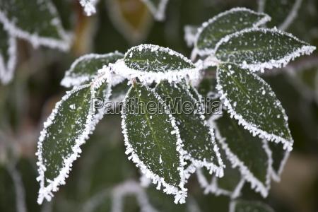 blatt baumblatt farbe baum kalt kaelte