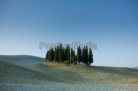 arboleda de cipreses en paisaje por