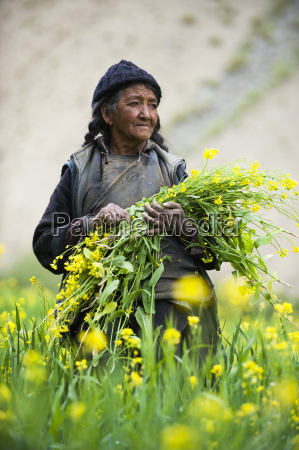 collecting flowers which will be used