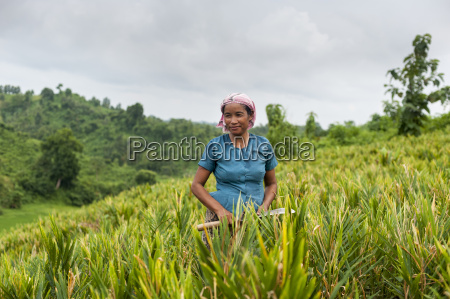 a marma woman clearing weeds in