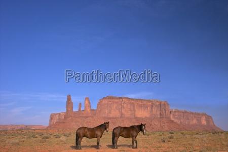 two navajo horses monument valley navajo