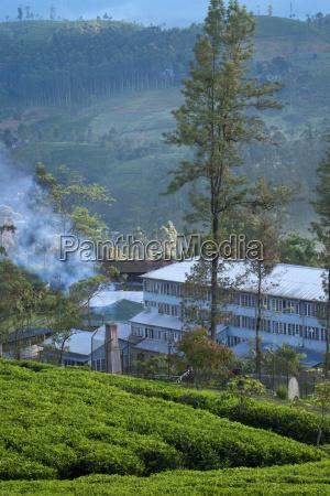 ceylon tea factory and plantation dickoya