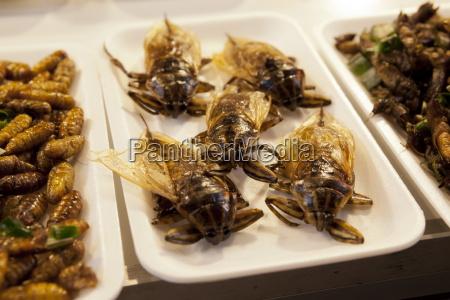 gebratene insekten am imbissstand im nachtbasar