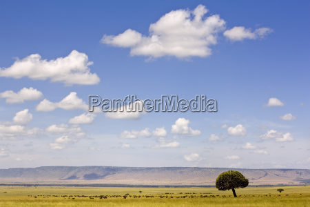 farbe baum afrika kenia wolke horizontal