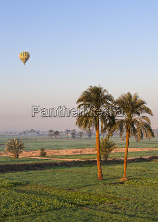 hot air balloon suspended over green