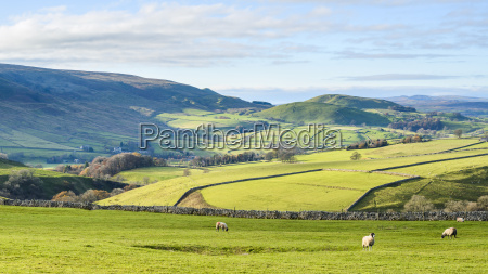 view towards elbolton kail hill and