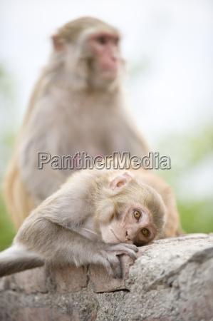 swayambhu monkey temple kathmandu nepal asia