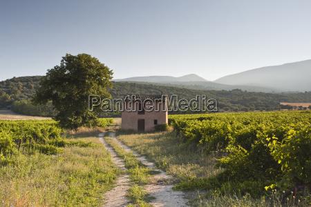 an old house amongst vineyards near