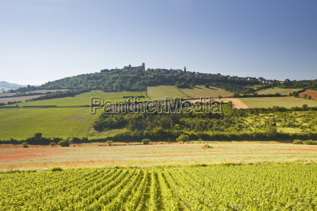 vineyards near to the hilltop village