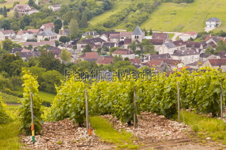 champagne vineyards near to balnot sur