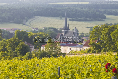 champagne vineyards in the cote des