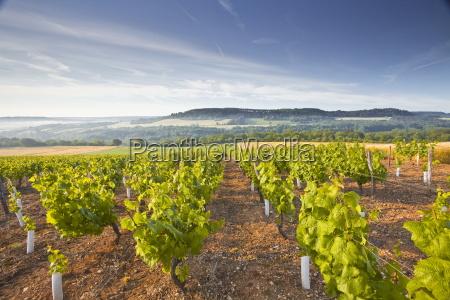 vineyards below the hilltop village of