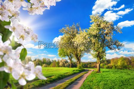 ein paradies im fruehling idyllische landschaft