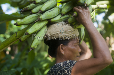 a woman carries freshly harvested bananas