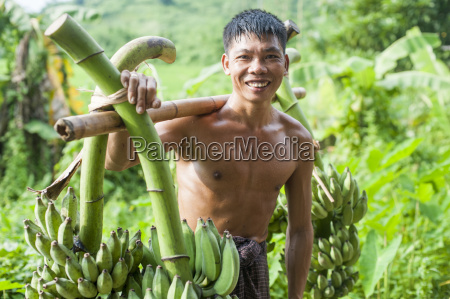 a mans carries freshly harvested bananas