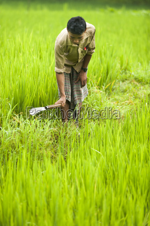 a man clears away grass from
