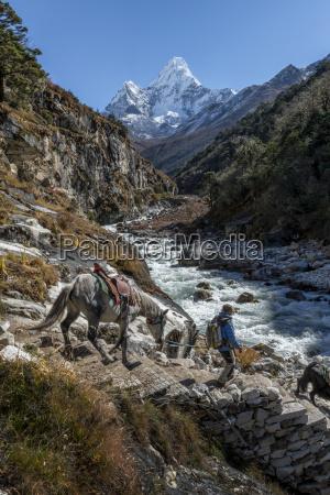 nepal khumbu everest region pangboche horse