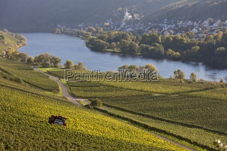 germany rhineland palatinate view of vineyards