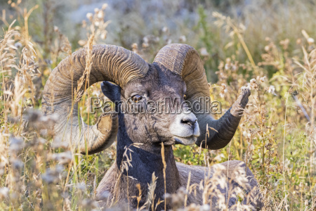 usa wyoming yellowstone national park portrait