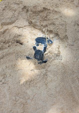 sri lanka hegalla piyagama kosgoda zuchtstation
