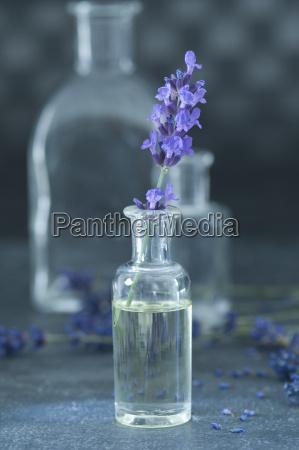 aromatisches oel und zweig von lavendel