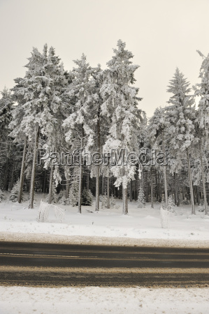 germany thurinigia oberhof forest and road