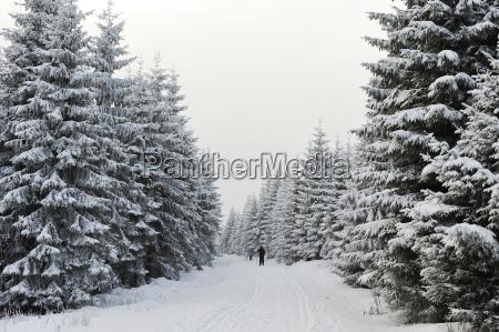 fahrt reisen sport baum winter deutschland