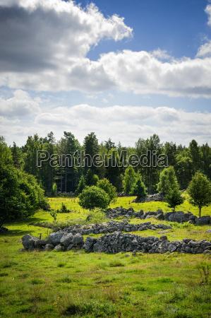 viaggio viaggiare albero pietra sasso svezia