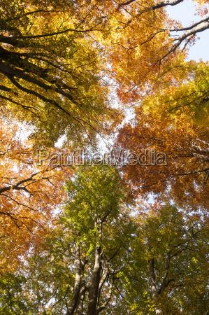 germany hesse autumn trees in sababurg