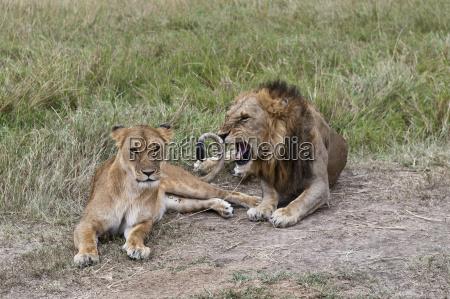 fahrt reisen tier saeugetier nationalpark afrika