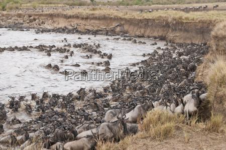 africa kenya maasai mara national park