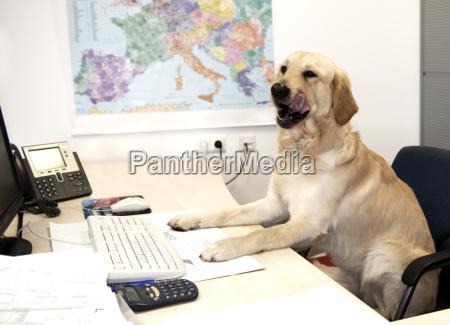telefon telephon buero tastatur computertastatur humor