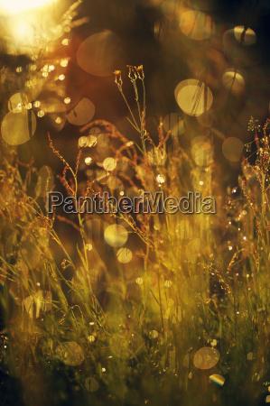 schweden leksand wassertropfen auf grashalmen