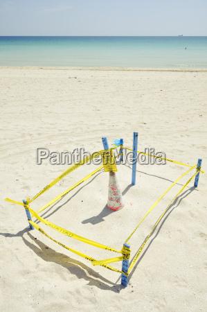 usa florida miami beach nest of