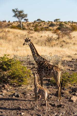 fahrt reisen tier saeugetier afrika savanne