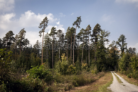 germany baden wuerttemberg friolzheim forest