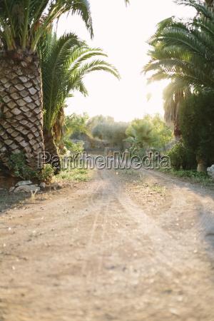 spanien mallorca felanitx palmen auf der