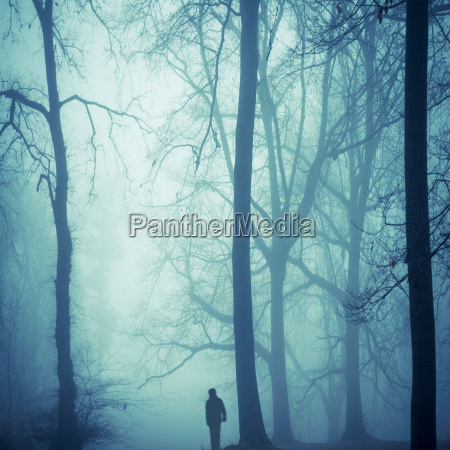 azul arbol nube niebla al aire