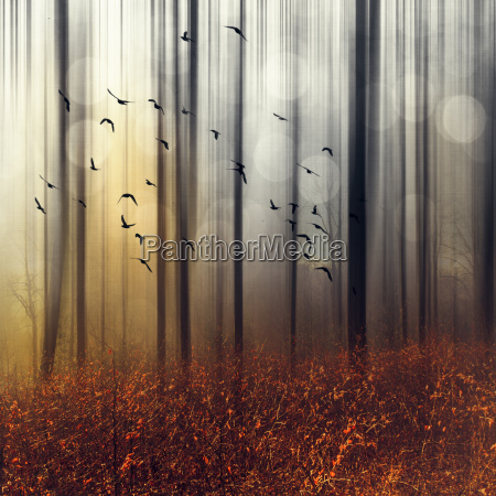 flock of birds in autumn forest