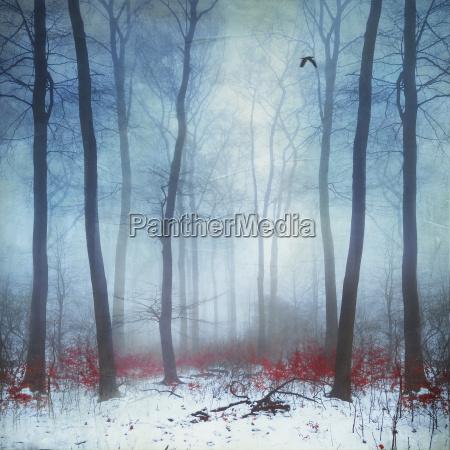 foggy winter forest digitally manipulated