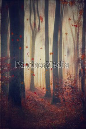 spadajace liscie w jesiennym lesie
