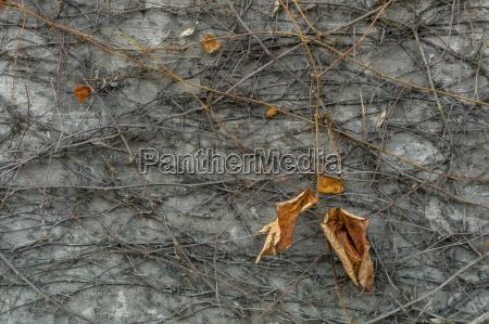 blatt baumblatt austria herbstlich outdoor freiluft