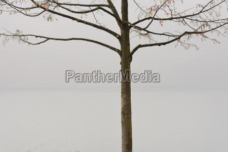 switzerland view of tree at lake