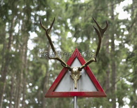 italy south tyrol hafling deer antlers
